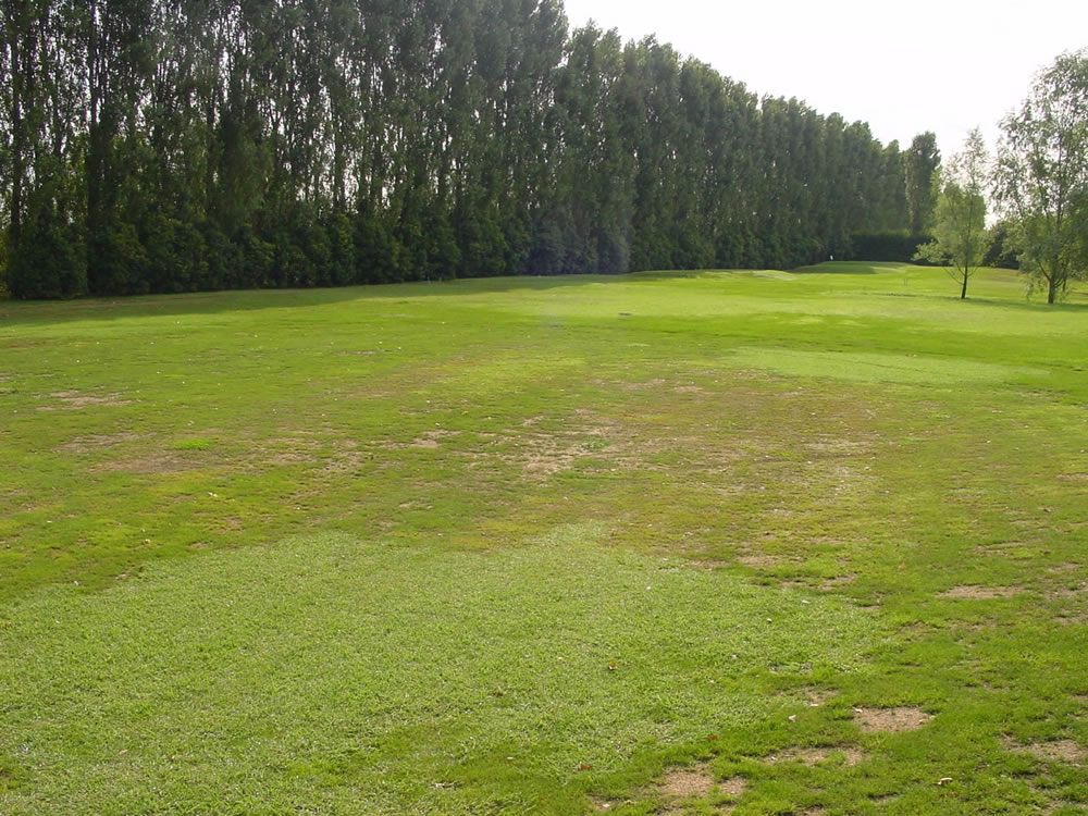 Estate_2003-fairway_buca_3